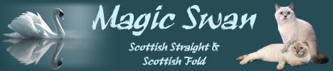 Питомник шотландских кошек Magic Swan